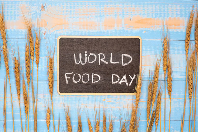 World Food Day Concept (October 16) Blackboard  Blue Board Close-up Communication Day Handwriting  Indoors  Message No People Pattern Positive Emotion Sign Single Word Text Wall - Building Feature Western Script White Color Wood - Material