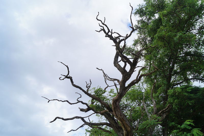 Beauty In Nature Branch Cloud - Sky Low Angle View Nature No People Outdoors Tree Tree Trunk
