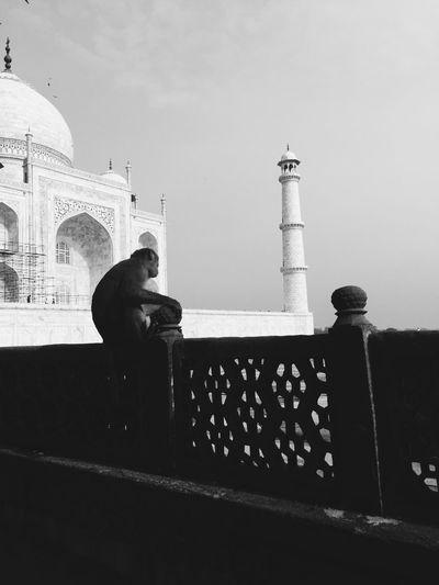 India Taj Mahal Architecture Blackandwhite Contrast Monkey Monument Outdoors