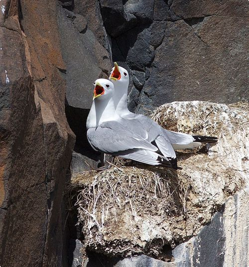 High angle view of birds perching on rock