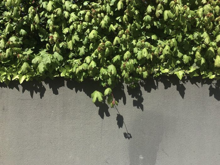High angle view of grapes on tree