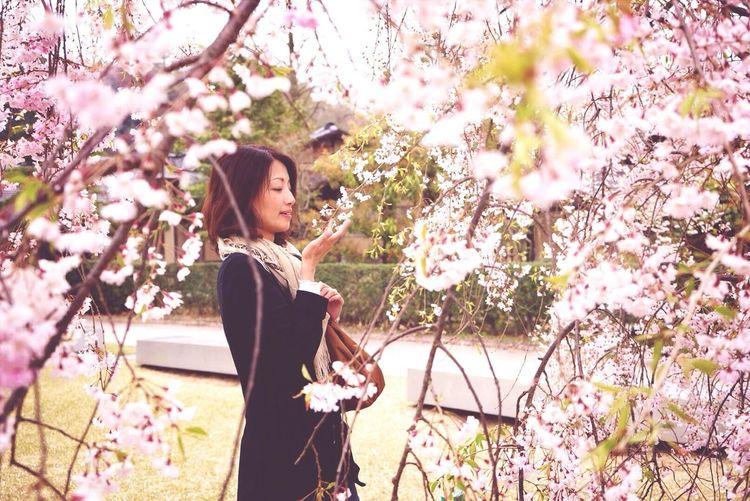 Portrait Model Sakura