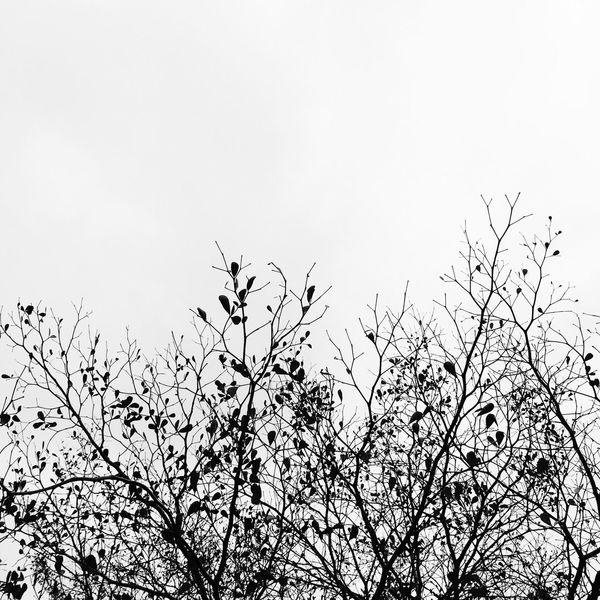 木,逢春。幻灭处必有春风雨露逢生时。6F03 x I6。Minimize hope always shows up when hopelessness. Canton China Vscocam Street Photography B&w IPhoneography Streetphoto_bw