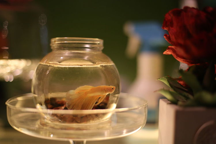 World of silence Jar Water Drink Indoors  No People Nature Day Close-up Canon Eos  Canon Photography Canon 6D 6D Canon Canonphotography Fish 鱼🐠 鱼眼看世界 鱼和水 鱼 鱼儿 EyeEmNewHere Let's Go. Together.