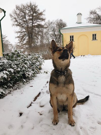 Snow Pets One Animal Animal Themes Domestic Dog Day Winter Nature Land Cold Temperature Tree