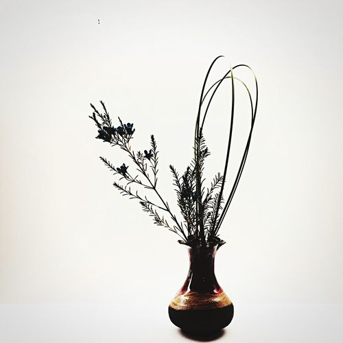 Flower Art EyeEm Best Shots - Flowers Japanese  Flower Arrangement 花飾り