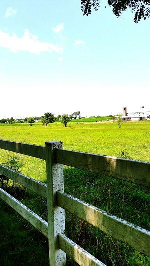 Fence Field