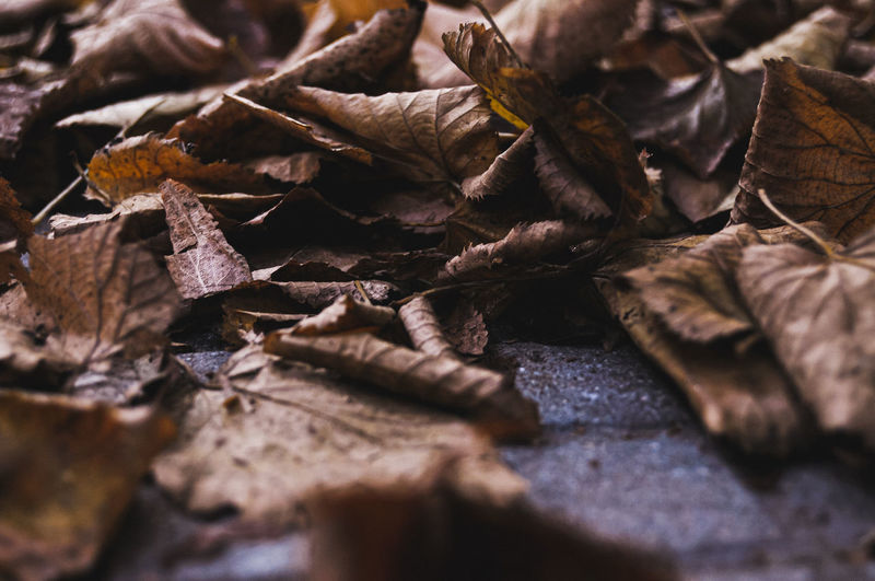 Close-up of dried autumn leaves
