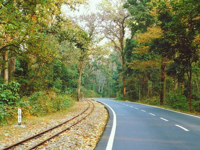 2 Ways Road Train Track Woods Travel The Way Forward Transportation No People Beauty In Nature Outdoors Nature Day Tree Toy Train Track Travel Photography Urban Geometry Sunset