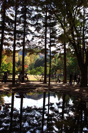 The reflection of the trees during springtime. What a nice peaceful view. Beautifyl Korea Tourist Travel View Background Beauty In Nature Beauty In Nature Day Growth Lake Land Nature Outdoors Plant Reflection Reflections In The Water Scenery Scenics - Nature Spring Tranquil Scene Tranquility Tree Water