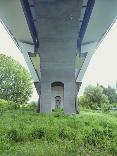 Green Trees Underneath Below Bridge - Man Made Structure Symmetry Architecture Built Structure Grass Viaduct Overpass Railway Bridge Under Arch Bridge Concrete