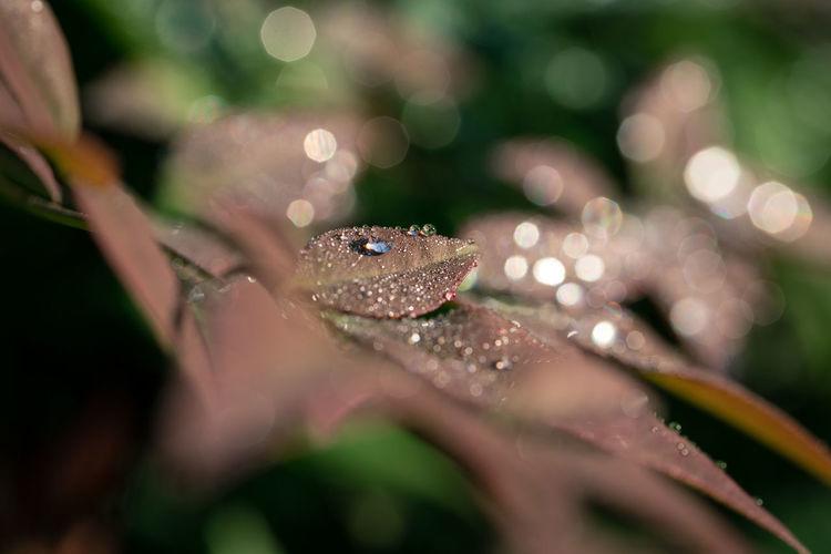 Sunlight falling on wet leaves during rainy season