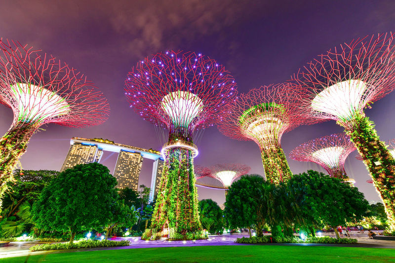 Supertree in Singapore in night time. Supertree is famous spot for traveler in Singapore city. Night Lights Singapore SuperTree Amusement Park Architecture Arts Culture And Entertainment Building Exterior Built Structure Celebration City Garden By The Bay Illuminated Motion Multi Colored Nature Night No People Outdoors Park Plant Purple Sky Travel Destinations Tree
