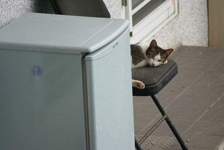 High angle view of cat resting on chair by refrigerator on footpath