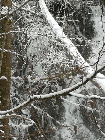 Eiszapfen Winter