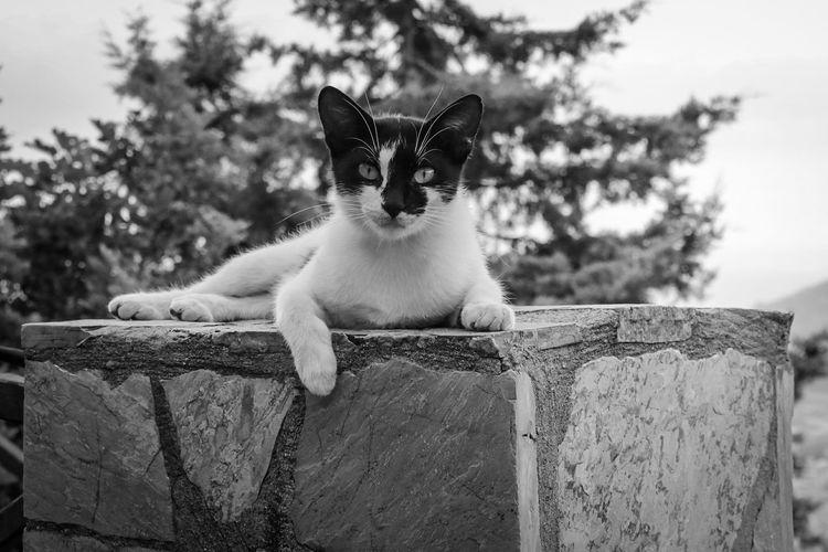 Katze Cat Tiere/Animals Hauskatze Süss Beautiful Chillout Canon_photos Canon Blackandwhite Black & White EyeEm Gallery Pets Domestic Cat One Animal Domestic Animals Animal Animal Themes Feline Day Outdoors