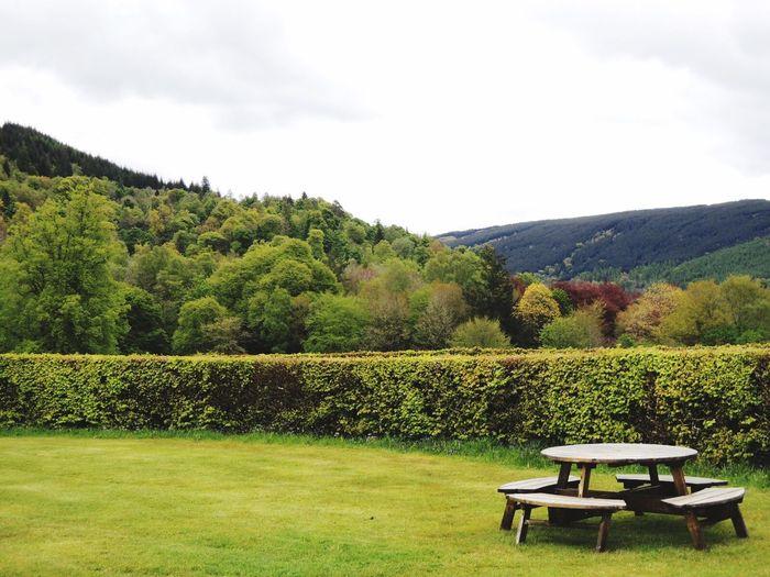 Quiet green corner in Scotland Bench Landscape Green Scotland