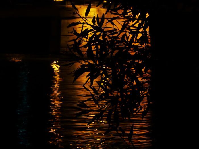Zoooom🤗 For My Friends🙄🙋♀️ Happy Moment♥ Lucky Me🦄 Beauty In Nature Simple Beauty Simple Photography Thankful🦄 Eye4photography  Memories ❤ EyeEm Best Shots Golden Water Reflections On The River Danube By Night Vienna❤ Tree Water Reflection Sky The Creative - 2018 EyeEm Awards