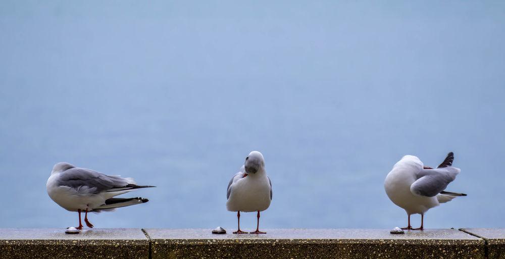 Seagulls perching on the beach