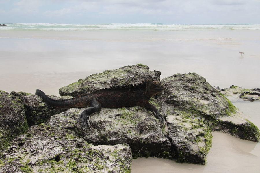 Animals Ecuador Galapagos Galapagos Islands Iguana Iguanas Landscape Landscape_Collection Landscape_photography Seal Sealife Seals Wildlife Wildlife & Nature Wildlife Photography