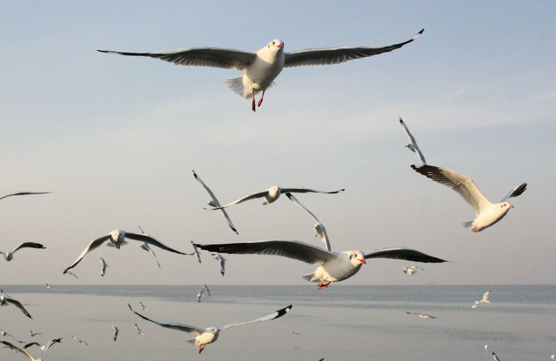 Seagulls flying over water against sky