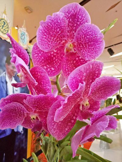 Orchid Flower Thailand ทรงพระเจริญ