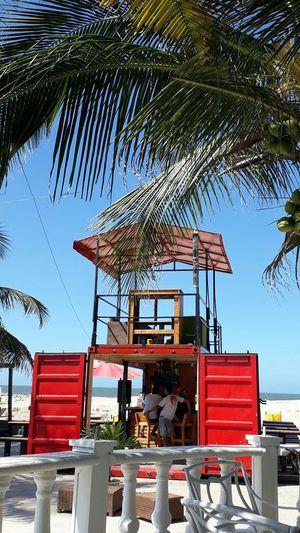 Tree Day Outdoors Palm Tree No People Sky Beach Nature EyeEm MMartenco Galaxy J5 Prime