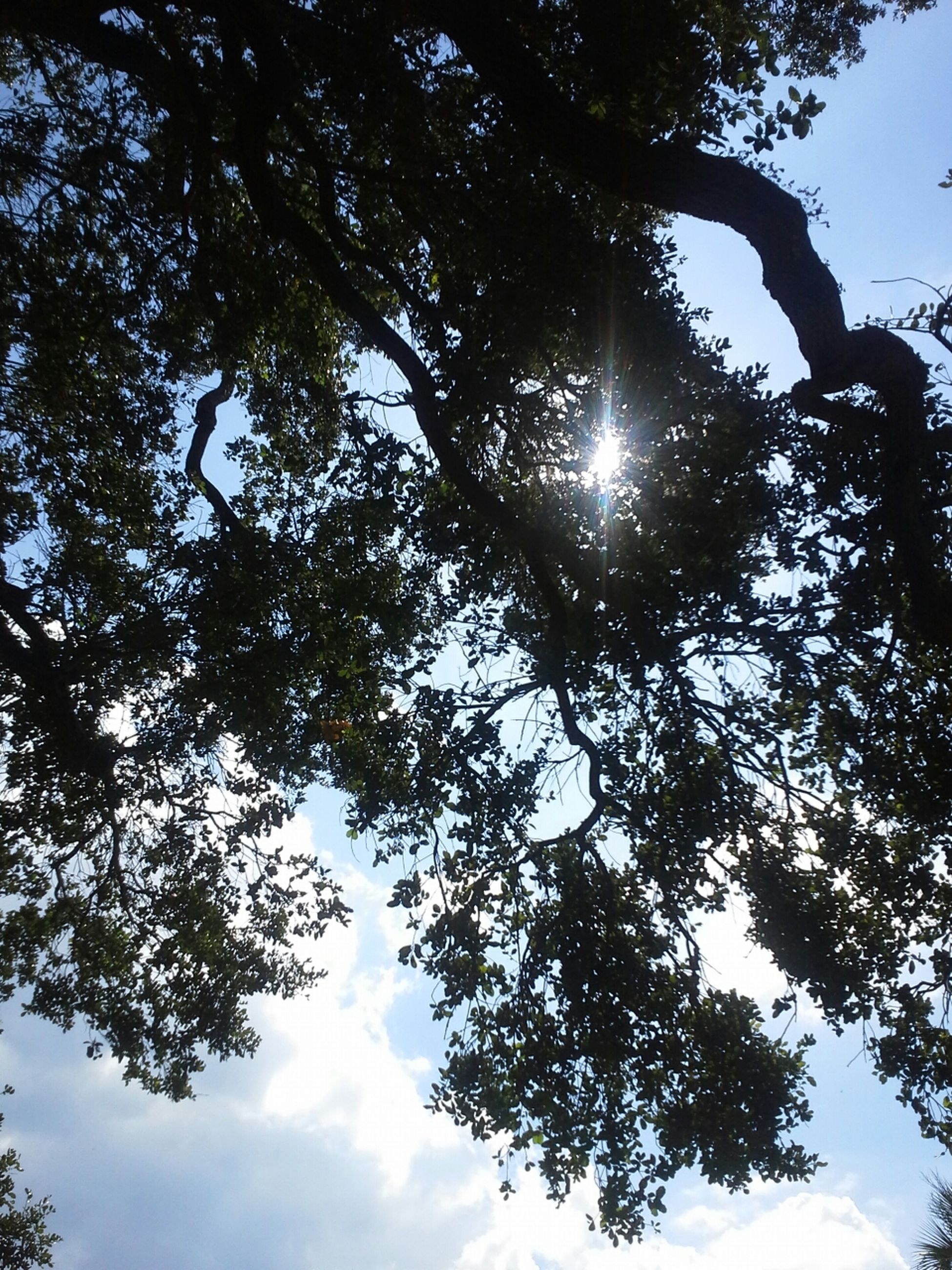 low angle view, tree, sun, sky, branch, growth, nature, tranquility, beauty in nature, sunlight, sunbeam, lens flare, silhouette, scenics, back lit, tranquil scene, day, outdoors, no people, cloud - sky