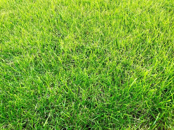 Background GreenGreenGreen Greenery Green Color Grass Full Frame Backgrounds Nature Close-up