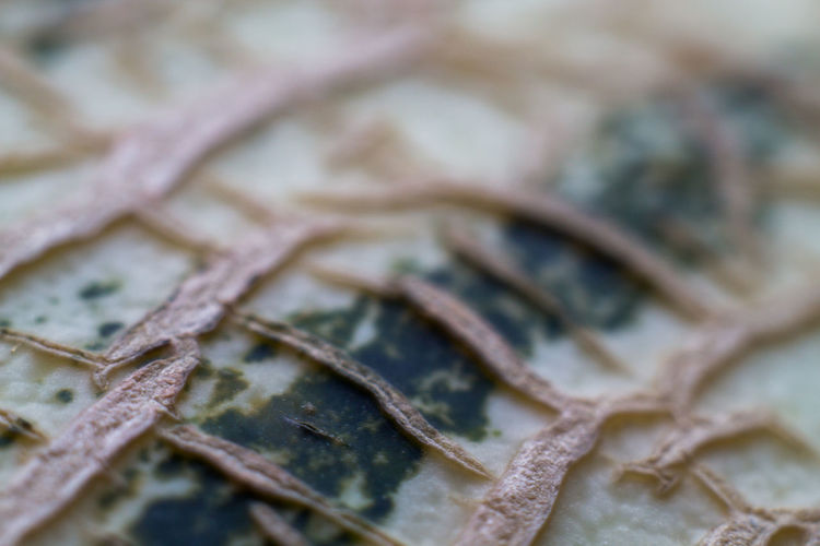 Backgrounds Close-up Focus On Foreground Food Food And Drink Freshness Healthy Eating Indoors  Melon Nature No People Pattern Selective Focus Shape Still Life Textured