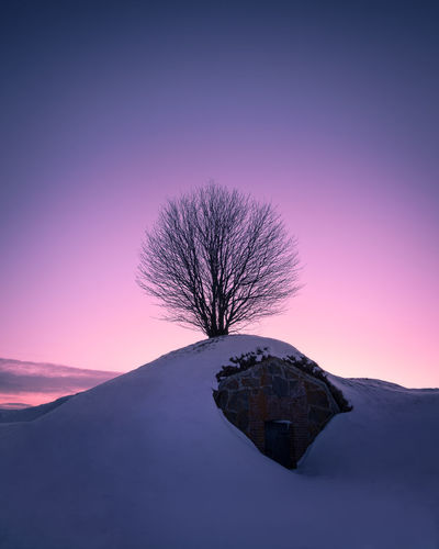 Scenic landscape with lonely tree against purple sky at winter evening in Helsinki, Finland Colors Loneliness Pink Scenic Silhouette Twilight Winter Atmospheric Mood Bare Tree Beauty In Nature Beauty In Nature Cold Temperature Dawn Dusk Landscape Nature No People Outdoors Purple Scenics Sky Snow Sunset Tree Winter The Great Outdoors - 2018 EyeEm Awards