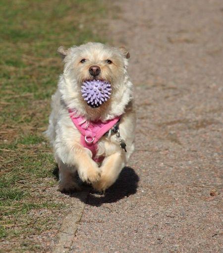 Dog Pets One Animal Animal Themes Domestic Animals Mammal Looking At Camera
