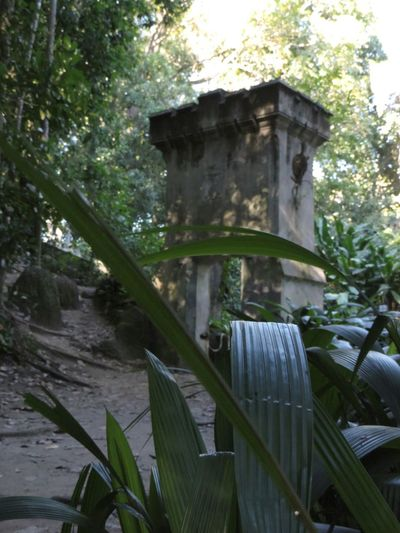 Nature On Your Doorstep Architecture Nature_collection Eyem Best Shots Parquelage Riodejaneiro Relaxing Brazil Curves