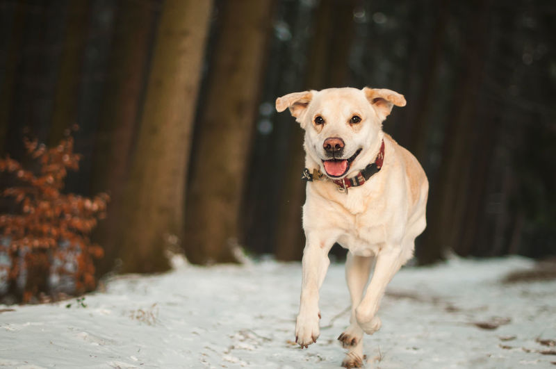 Portrait of dog running outdoors