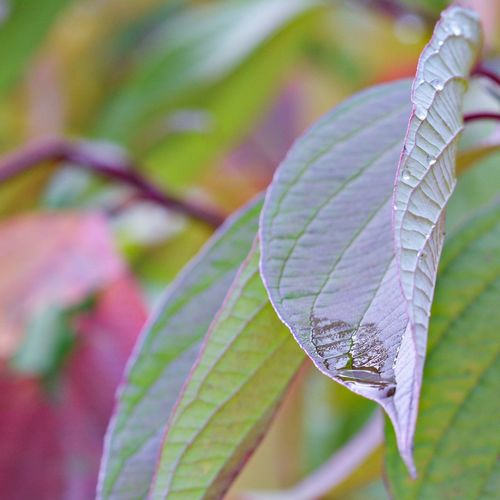 Close-up of leaf on plant