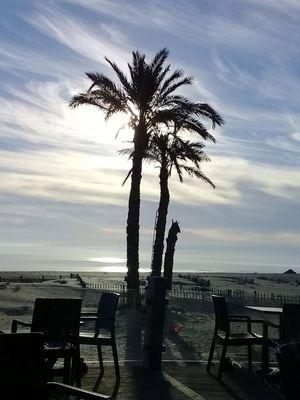 Gabes Chair Sky Sea Horizon Over Water Beach Palm Tree Table