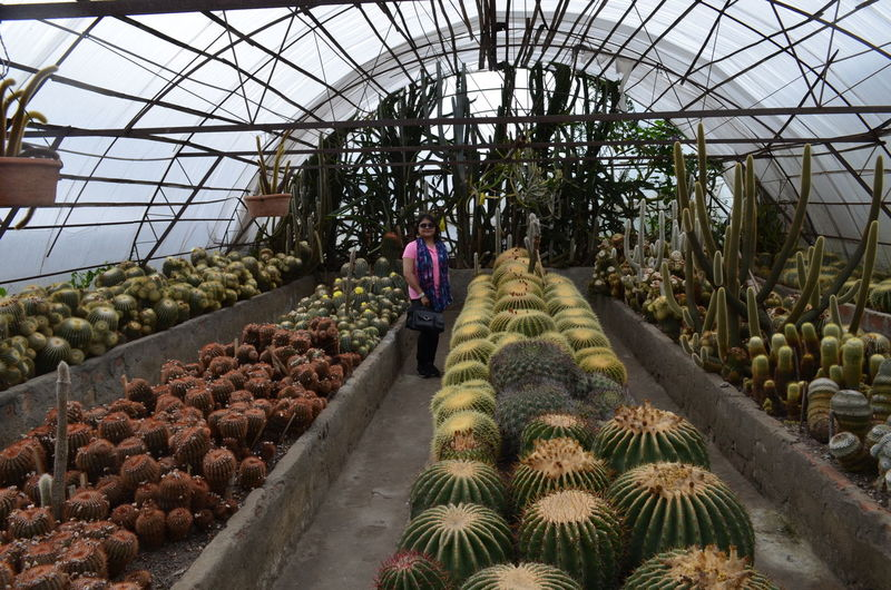 Mid adult woman standing in greenhouse