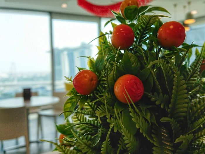 Lucky orange. Lunar New Year Gong Xi Fa Cai Lucky Orange Auspiciousness Wealth Fruit Red Tree No People Close-up Indoors  Growth