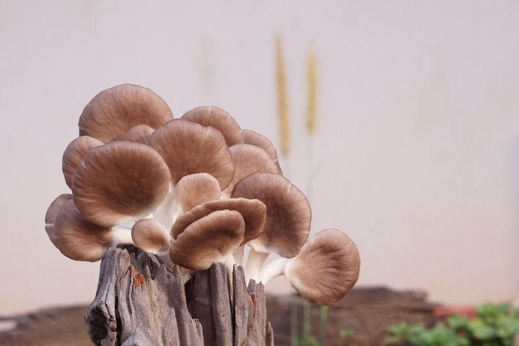 Close-up of mushrooms growing on wood