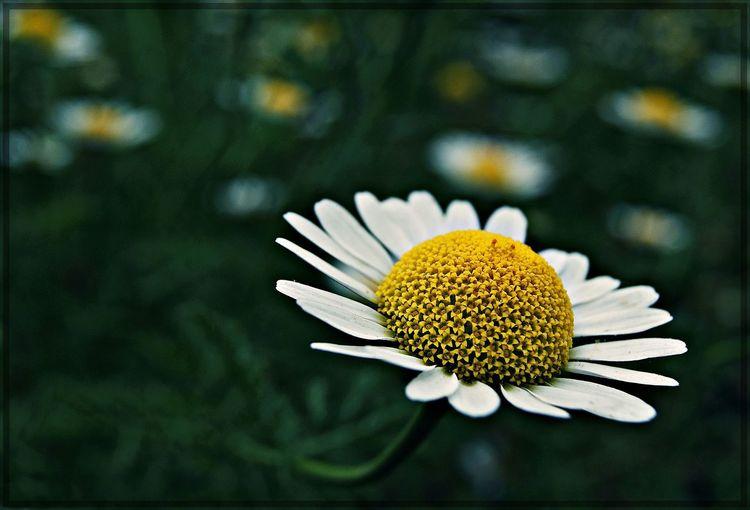 Flowers Flowerlovers Sony A330 Flowers,Plants & Garden Eyem Best Shots Eyembestshots Konya Turkey Macro Beauty