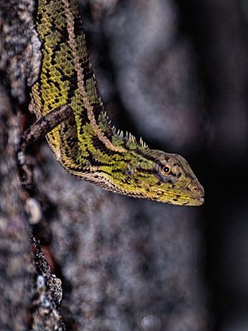 EyeEm Selects Animal Wildlife One Animal Reptile Animal No People Nature Animals In The Wild Portrait Outdoors Day Animal Themes Camouflage Beauty In Nature Multi Colored Branch Close-up