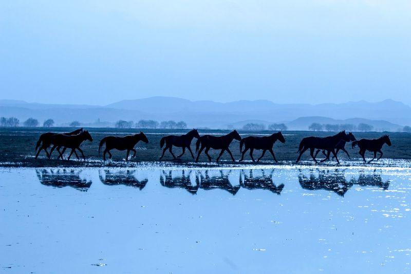 Horses running by lake against sky