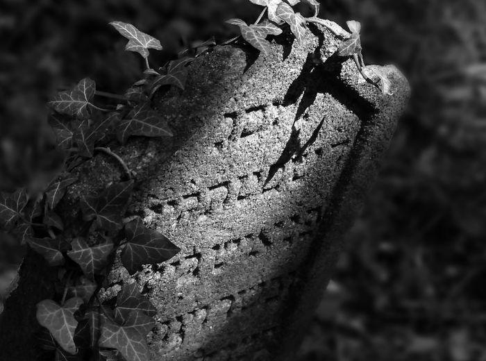Detto fatto! Jewish Cementery . Blackandwhite Taking Photos Travel Shades Of Grey