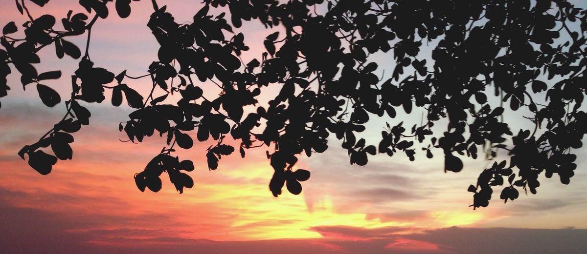 The Essence Of Summer Summer Before Sunrise Sad Sky Orange Sky Leaf Sri Chang Island Thailand