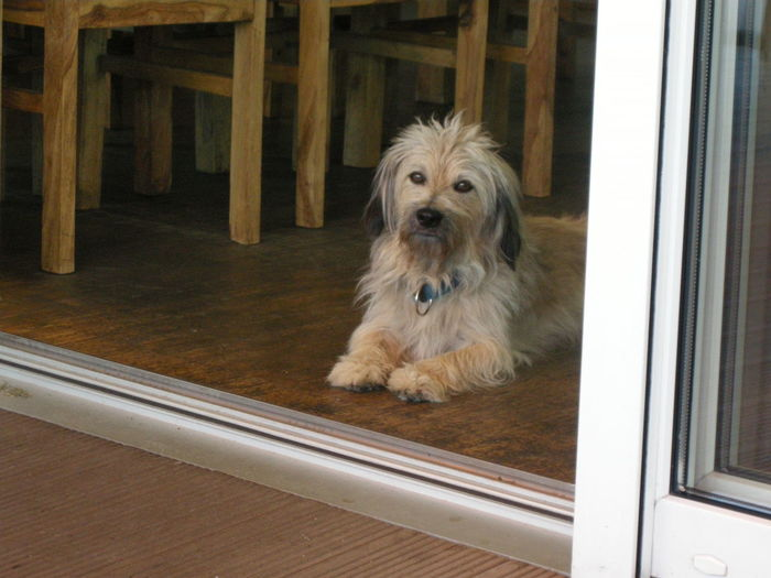 Dog sitting on hardwood floor at home