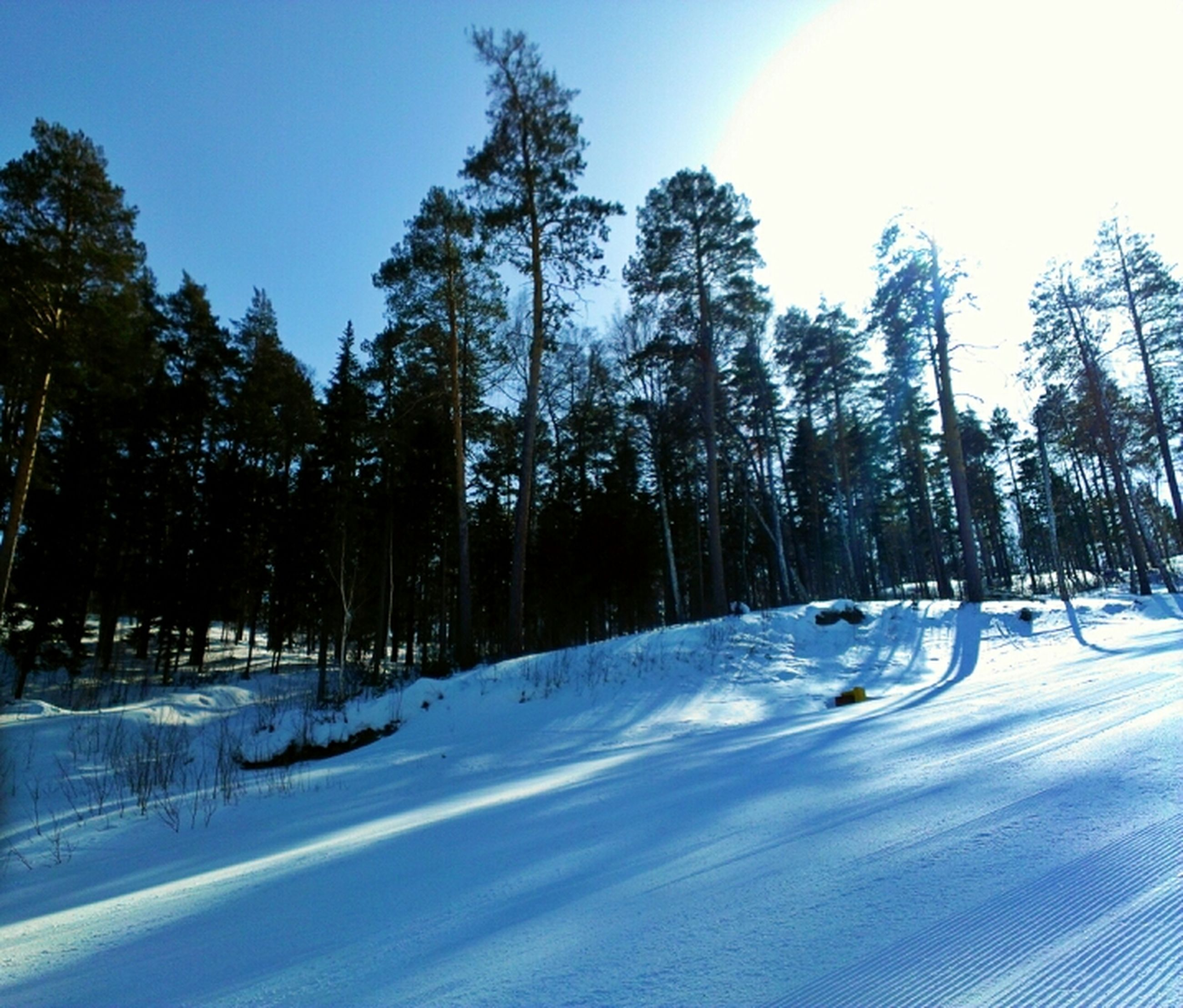 snow, cold temperature, winter, tree, season, tranquility, nature, blue, beauty in nature, tranquil scene, white color, sunlight, covering, road, weather, clear sky, frozen, scenics, sky, landscape