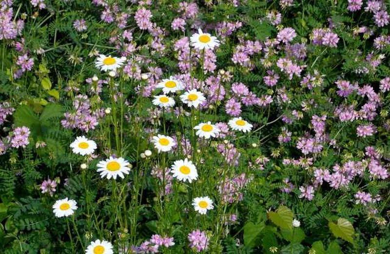 Nikon L810  Flowersland Road Trippin It! Not My Garden