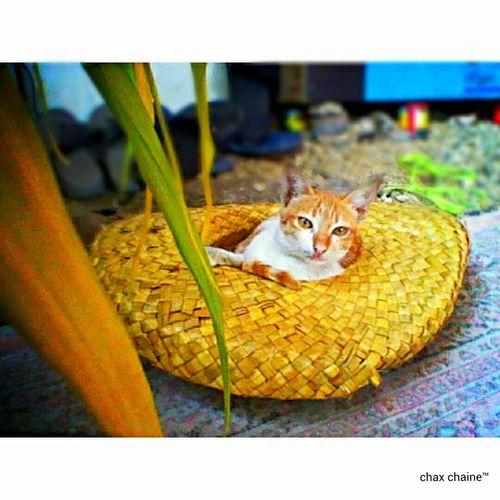 You have no idea how vain i am. Cats 🐱 Photoshoot Kunuhay