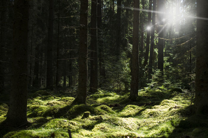 Green Light Nature Nature Photography Trees Focus On Foreground Moss Nature_collection Naturelovers Naturephotography Sun