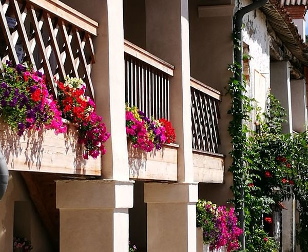 Flower House Window Residential Building Balcony Porch Front Or Back Yard Outdoors Plant Summer Window Box Architecture Day Built Structure No People Building Exterior Nature Lifestyles Flowerbed Beauty In Nature